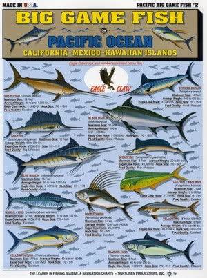 Fishing102.jpg