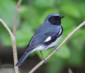 Audubon102.jpg