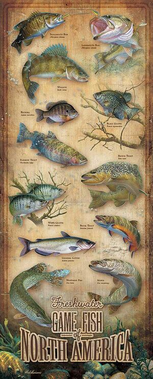 Fishing101.jpg