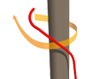 Clove hitch step 1.png