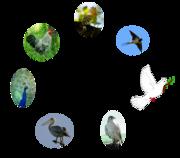 Les sept oiseaux de la proposition (logo non officiel)