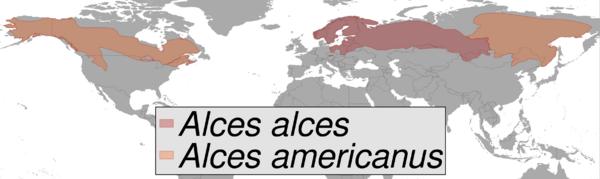 Répartition géographique des deux espèces d'élan dans le monde